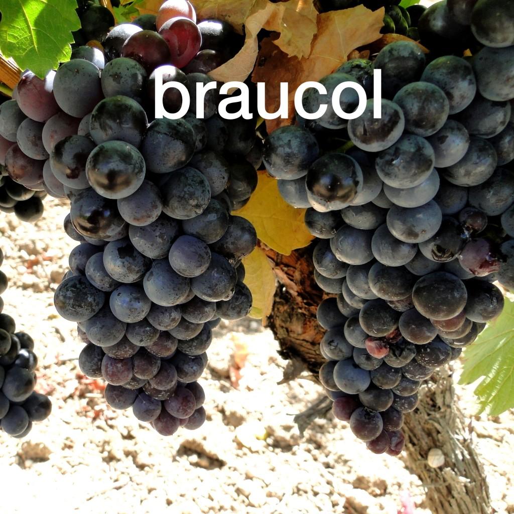 Braucol Clos Rocailleux