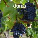 Duras 20 aout 2012 010-004