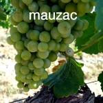 Mauzac Clos Rocailleux