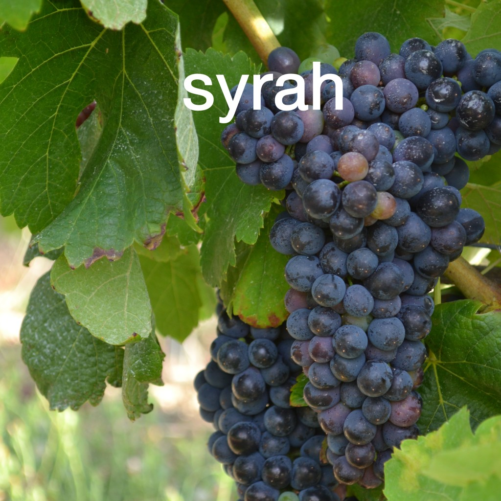 Syrah Clos Rocailleux