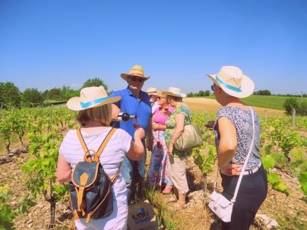 Walks & Wine tasting in the vines - Tarn